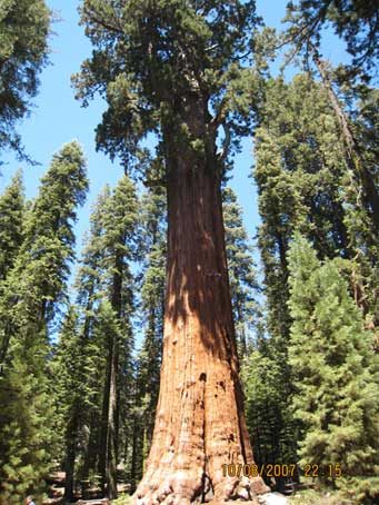 Gen-Sherman-Sequoia-NP